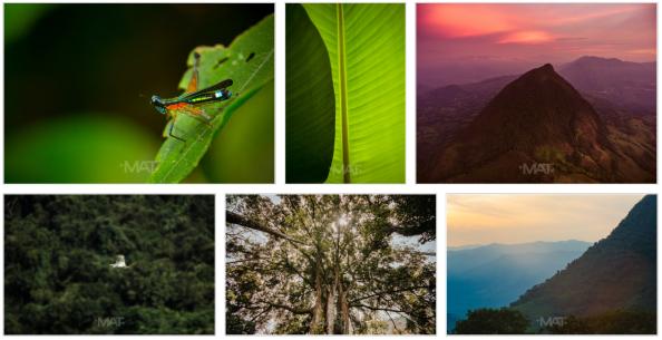 Nature Cerro Tusa 2.png